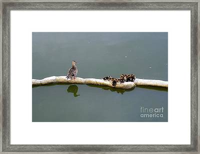 Under Mom's Watchful Eyes Framed Print by Charline Xia