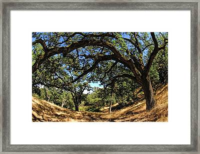 Under The Oak Canopy Framed Print by Donna Blackhall