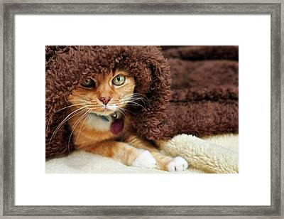 Under Wraps Framed Print by Barbara Taeger Photography