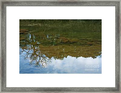 Underwater Landscape Framed Print by Lisa Holmgreen