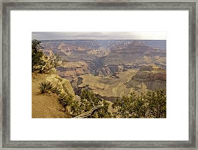 Untitled Framed Print by David Edwards