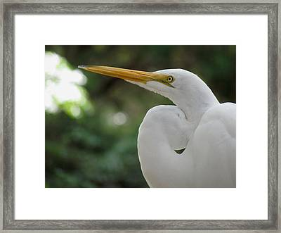 Up Close And Personal Framed Print by Judy Wanamaker