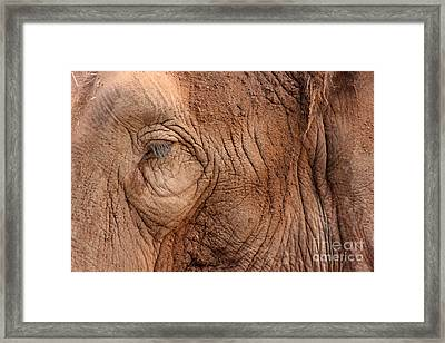 Up Close And Personal Framed Print by Mary Mikawoz