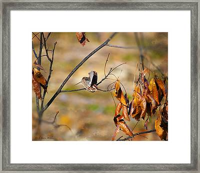 Up Up And Away - Sparrow Framed Print by J Larry Walker
