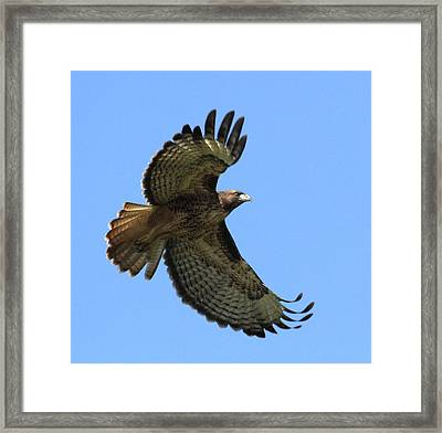 Up Up And Away Framed Print by Angie Vogel