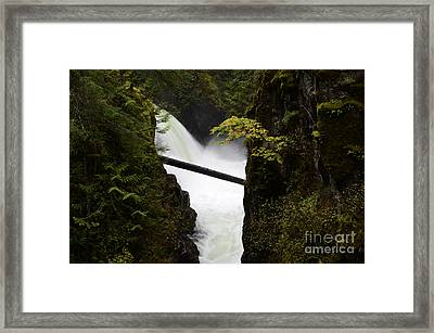 Upper Qualicum Falls Framed Print by Bob Christopher