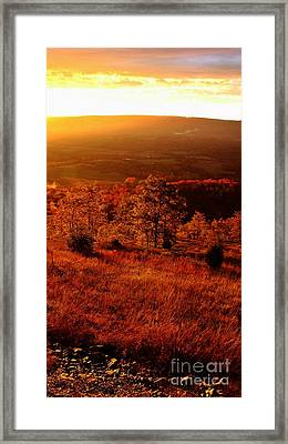 Valley Of Gold Framed Print by Steven Lebron Langston