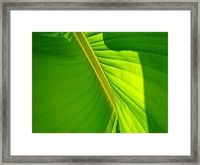 Veins Of Green Framed Print by Nick Kloepping