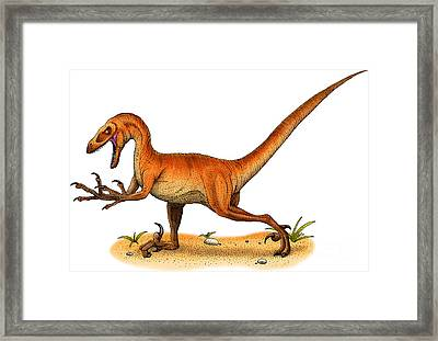 Velociraptor Framed Print by Roger Hall and Photo Researchers