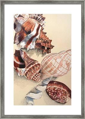 Vertical Conch Shells Framed Print by Glenda Zuckerman