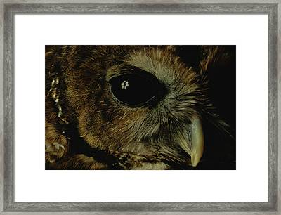 View Of A Northern Spotted Owl Strix Framed Print by Joel Sartore