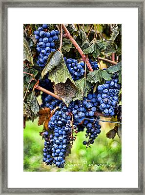 Vines And Clusters Framed Print by Randy Wehner Photography