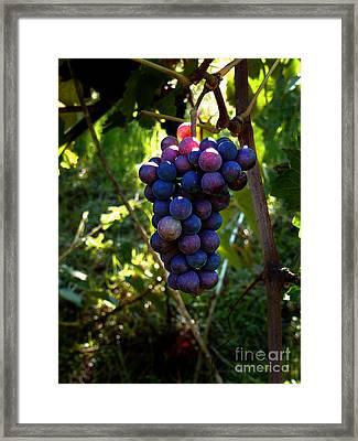 Vineyard 31 Framed Print by Xueling Zou