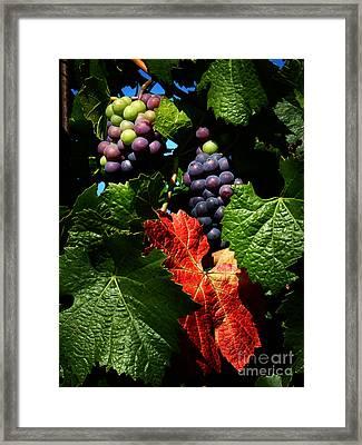 Vineyard 32 Framed Print by Xueling Zou