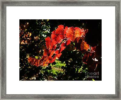 Vineyard 34 Framed Print by Xueling Zou