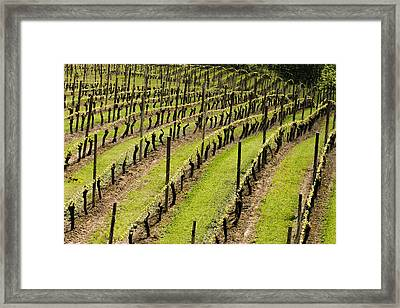Vineyard In July Framed Print by Jean Noren