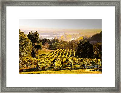 Vineyard Framed Print by Voisin and Phanie and Photo Researchers