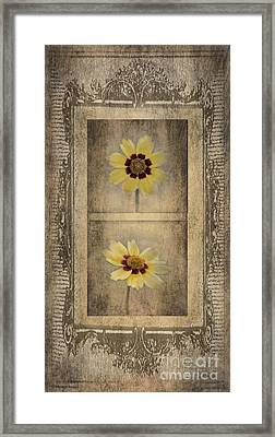 Vintage Coreopsis Framed Print by Betty LaRue