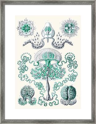Vintage Jellyfish Framed Print by Patruschka Hetterschij