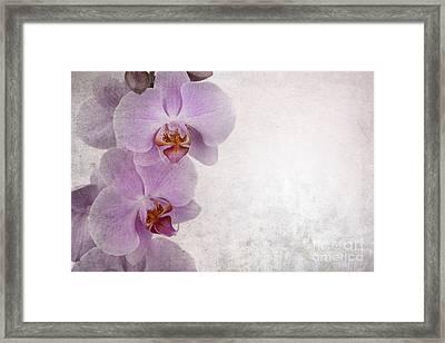 Vintage Orchids Framed Print by Jane Rix