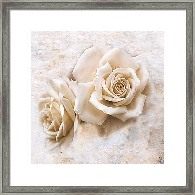 Vintage Rose Iv Square Framed Print by Jai Johnson