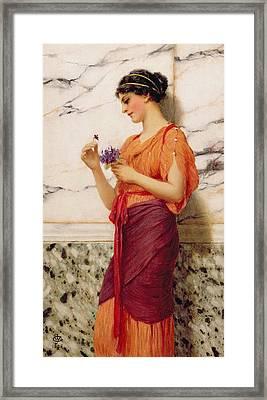 Violets Framed Print by John William Godward