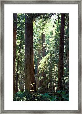 Virgin Forest Framed Print by John  Bartosik