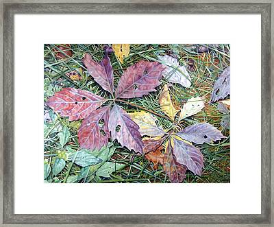 Virginia Creeper Framed Print by - Harlan