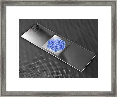 Virus On Microscope Slide Framed Print by Laguna Design