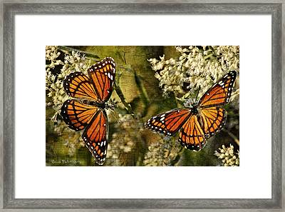 Vision Of Viceroys Framed Print by Bonnie Barry