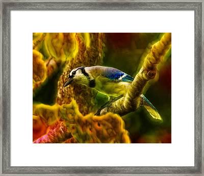 Visions Of A Blue Jay Framed Print by Bill Tiepelman