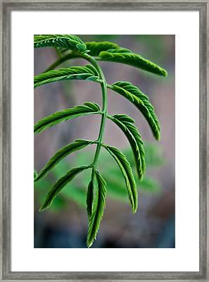 Vivid Plant Framed Print by Erik Hovind