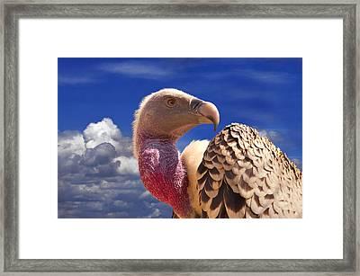 Vulture Framed Print by Alessandro Matarazzo
