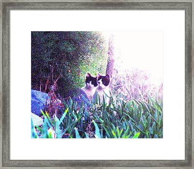 Waiting For Mom Cyprus Framed Print by Anita Dale Livaditis