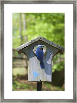 Waiting For Worms Framed Print by Gregory Scott