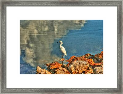Waiting On Dinner Framed Print by Greg and Chrystal Mimbs