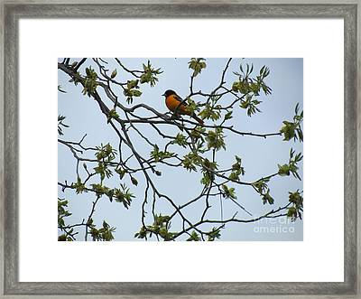 Waiting Framed Print by Randi Shenkman