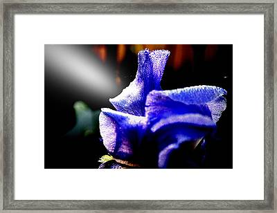 Wakeupcall Framed Print by Norman Lee