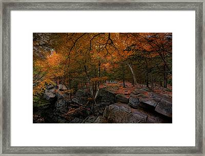 Walk On The Wild Side Framed Print by Robin-lee Vieira