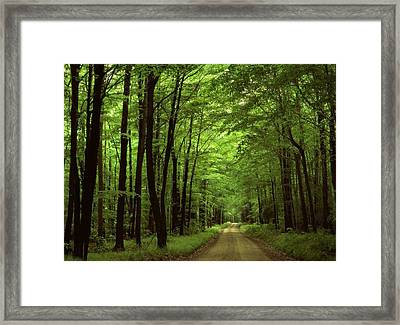 Walking Away Forest Path  Framed Print by ilendra Vyas