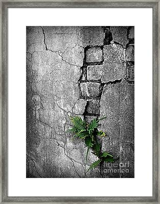 Wall Ferns Framed Print by Perry Webster