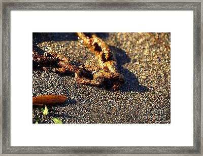Washed Ashore Framed Print by Cheryl Young