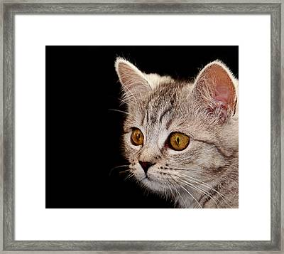 Watching You Framed Print by Claudia Moeckel