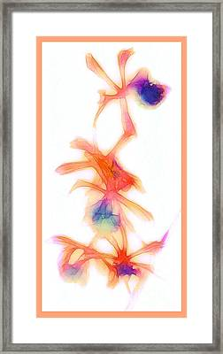 Water Color Orchids Framed Print by Judi Bagwell