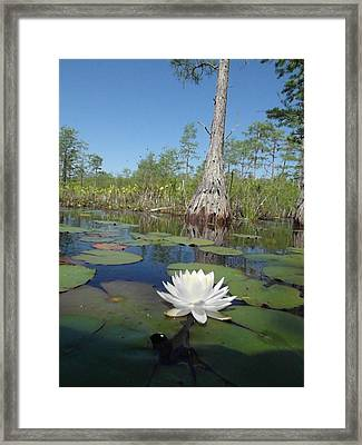 Water Lily 2 Framed Print by Tanya Moody