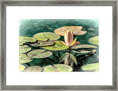 Water Lily Bud Framed Print by Jak of Arts Photography