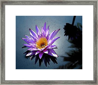 Water Lily Dream At Fairchild 2 Framed Print by Olivia Novak
