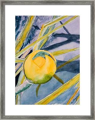 Water Lily Habitat Framed Print by Warren Thompson