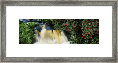 Waterfall And Fuschia, Ireland Framed Print by The Irish Image Collection