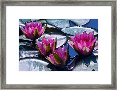 Waterlilies In Bright Sunlight Framed Print by Byron Varvarigos